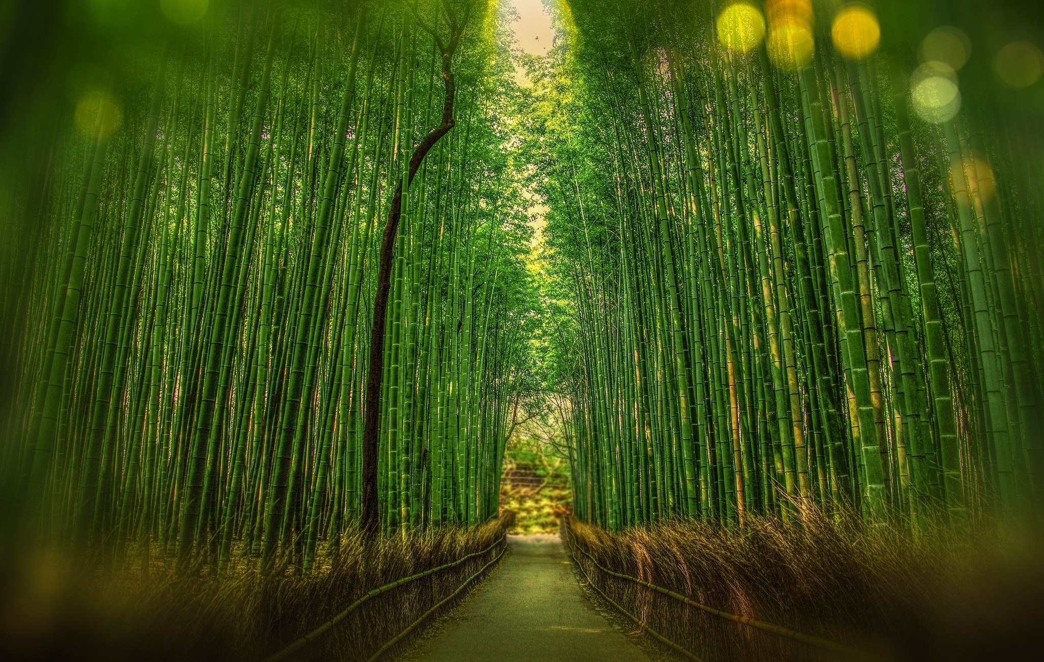 Personal Growth – What We Can Learn From Bamboo